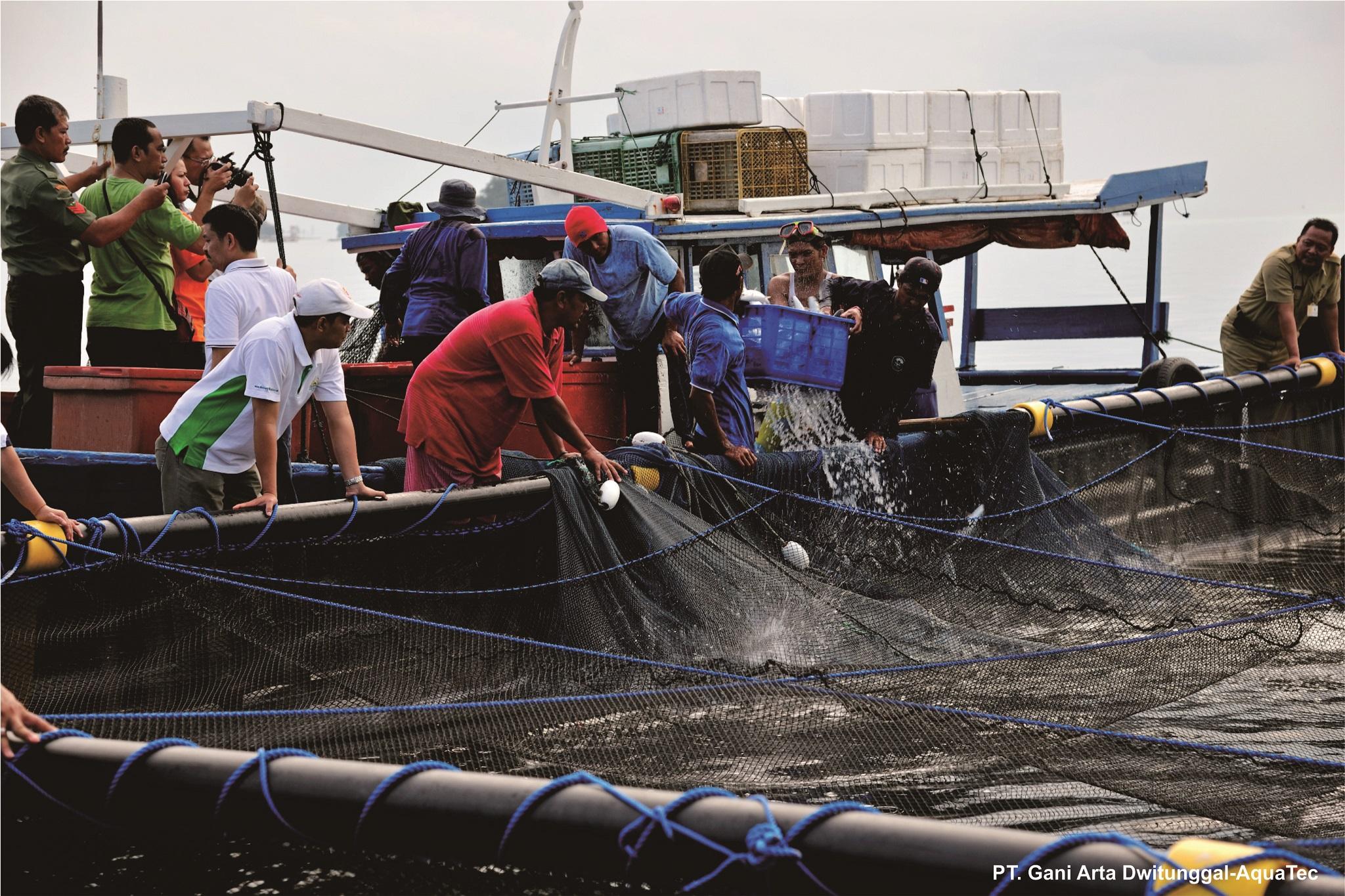 Manfaat Vaksinasi Bagi Keberhasilan Budidaya Ikan