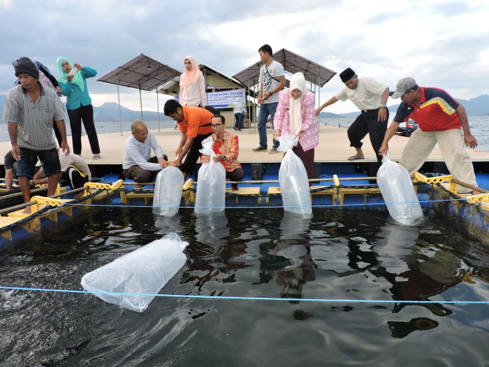 Peran BBL Lombok Dalam Teknik Budidaya Ikan Bawal Bintang (Trachinotus Blochii)
